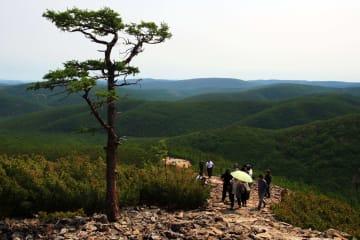 黒竜江省大興安嶺地区、7年間で植生回復が大きく進展