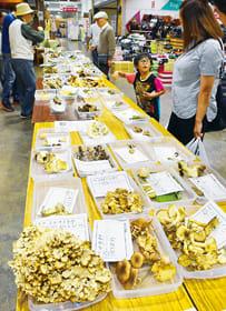 約80種類のキノコを並べた室蘭きのこの会の展示会