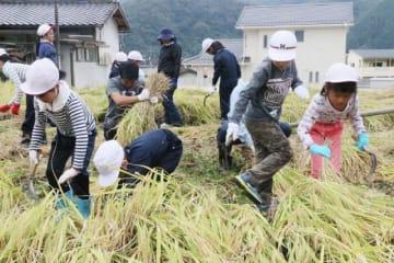 鎌で稲を刈り取る児童たち
