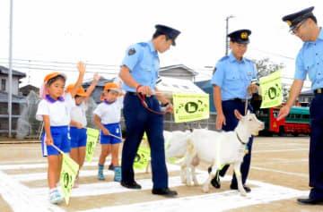 子ヤギと一緒に横断歩道の渡り方を学ぶ梅花幼稚園の園児