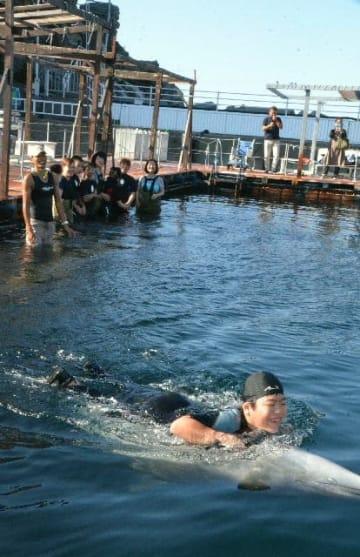イルカと一緒に泳ぐ参加者ら=津久見市四浦のつくみイルカ島