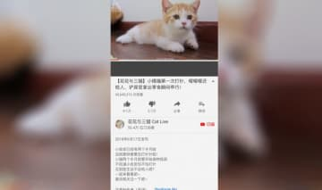 Screenshot of Chen Zhanwei's YouTube channel, CatLive. (Image credit: YouTube)