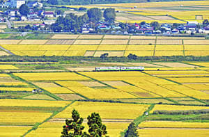 会津盆地では稲刈りが進む中、只見線の列車が走る