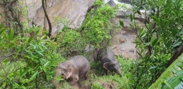 タイ中部のカオヤイ国立公園内の滝付近で身動きが取れなくなっていた2頭のゾウ=5日(国立公園提供、AP=共同)