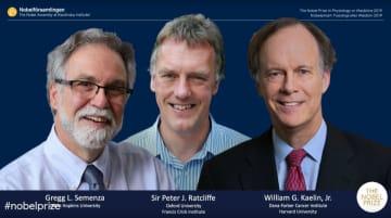 7日、ノーベル医学生理学賞の受賞が決まった(左から)グレッグ・セメンザ氏、ピーター・ラトクリフ氏、ウィリアム・ケリン氏(ノーベルメディアのホームページより、共同)