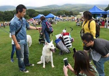 あちこちで飼い主同士の交流も見られた「DOGFES IWAKI2019」