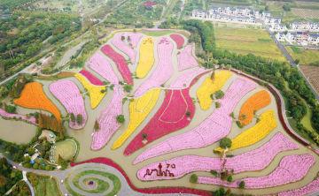 秋の花が見頃 一面の花畑へ出かけよう 上海