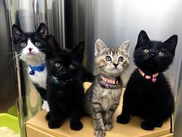 これまでに譲渡された保護猫(神戸市動物管理センター提供)