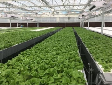 An indoor vegetable cultivation plant system Mitsubishi Chemical supplied to ShenYang Qiushi Agricultural Science and Technology Development in 2018.