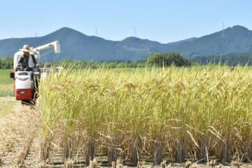 ピークを迎えた稲刈りに汗を流す、えびの市の農家=9日午後、同市向江