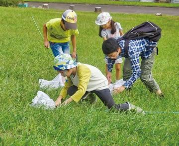 10分間の虫捕りを行う児童たち