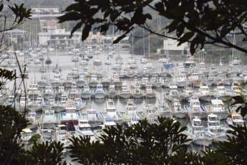 台風19号に備え、油壺湾避難泊地に避難する船=11日正午ごろ、三浦市三崎町小網代