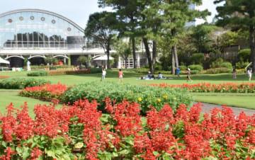 園内を真っ赤に彩るサルビアや咲き始めたマリーゴールド