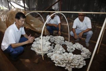 中国の菌草技術がフィジー農家の貧困削減を後押し