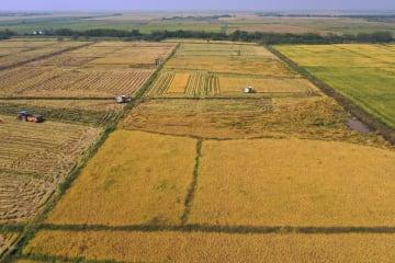 江西省南昌で中稲の収穫がピーク