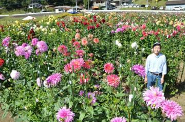 見事に咲きそろったダリアと長谷川さん