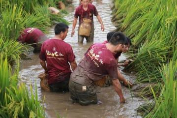 一面に広がる田園風景 素朴な農村風情を楽しもう 雲南省