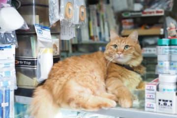 店のカウンターに寝そべり、お客を出迎える小哲