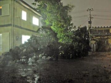 台風による強風で住宅の敷地内に倒れた木=12日午後7時10分ごろ、相馬市