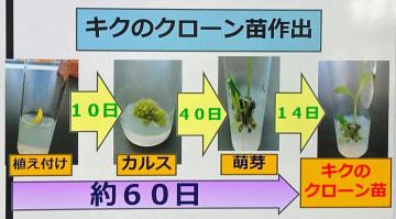 簡単な組織培養法で植物のクローン苗ができる過程(同校提供の資料より)