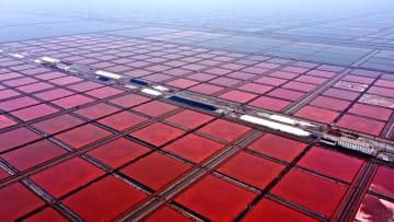 深まりゆく秋 海塩が収穫期迎える 山東省無棣県