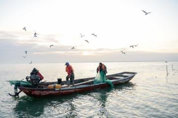 新疆・ボステン湖でイシカリワカサギが大漁 日本へ輸出
