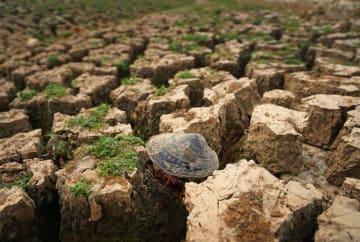 江西省各地で干ばつ被害 水不足深刻に