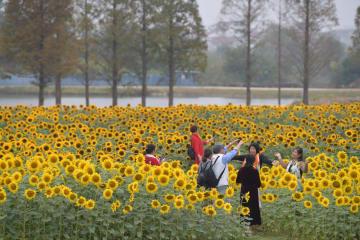「花の海」に遊ぶ秋 江西省南昌市