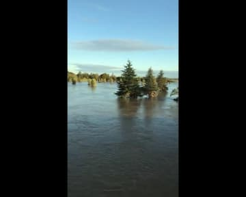 台風直後の川越線、まるで「千と千尋」の世界? どこか幻想的な車窓風景が話題