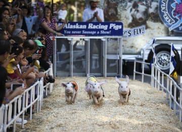 子豚レース、米ロサンゼルスで開催