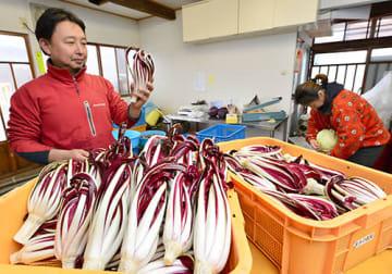 11月に香港に輸出されるイタリア野菜(写真はタルティーボ)。来年1月には現地でフェアも予定している