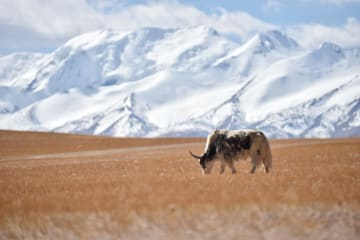 秋深まる夏崗江雪山の景色 チベット自治区ガリ地区