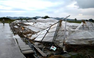 豪雨と氾濫した川の水の影響で倒壊したイチゴのハウス=15日午後、鹿沼市久野