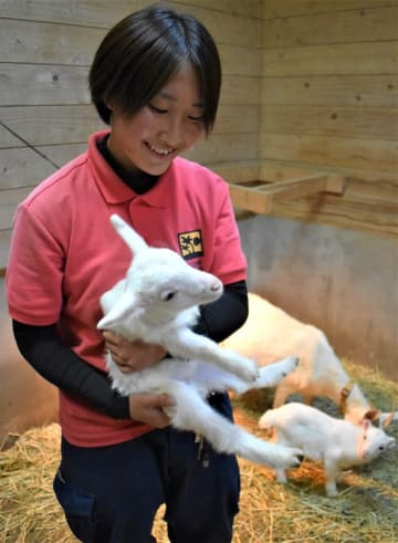 台風被災後の9月下旬に生まれた子ヤギ=千葉県館山市のアロハガーデンたてやま