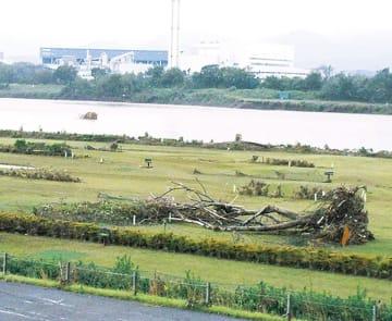 流木が漂着した三川公園