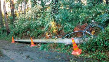 小池地区での倒木のほか電柱も倒れた(読者提供)
