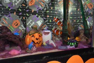 ハロウィーン一色の水槽で泳ぐカクレクマノミ