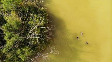 秋深まる黄河河口に広がる自然の美 山東省